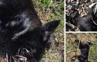 В Ужгороді між керівником одного з ОСББ та зоозахисниками виник конфлікт через потруєних собак