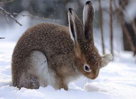 Закарпатські лісівники: за вбитого зайця - штраф 8 тисяч гривень