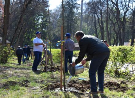 В Ужгороді в Боздоському парку висадили алею платанів