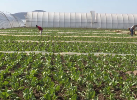 Закарпатські фермери не знають куди дівати вирощену продукцію