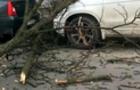 В центрі Ужгорода гілкою з дерева побило три автомобіля (ВІДЕО)