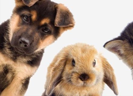 Лише 10% закарпатців не тримають вдома тварин (ОПИТУВАННЯ)