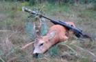 На Закарпатті лісівники влаштували вже 350 рейдів по боротьбі з браконьєрами