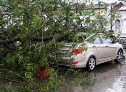 Стихія наробила біди на Закарпатті: деревами пошкоджено три автівки