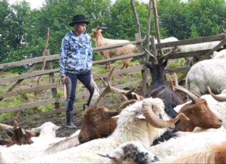 Вівчарі та сировари Хустщини об'єдналися аби врятувати ремесло