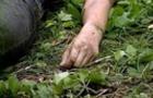 На Тячівщині серед поля виявили тіло чоловіка, який помер через переохолодження
