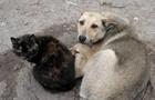 Мукачівська влада виділила 5 млн. гривень на утримання безпритульних тварин