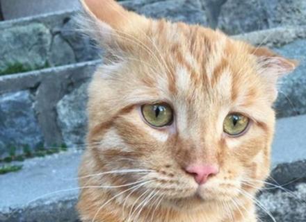 Пара взяла найсумнішого кота, і як він змінився з часом