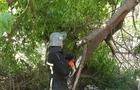 У Сваляві дерево впало на дах лікарні