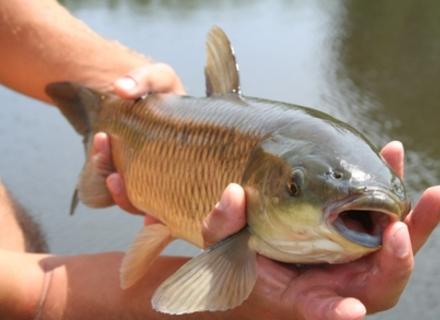 Як організувати риболовлю в Карпатах?