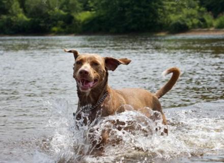 Як у спеку захистити собаку від перегріву