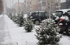 В Ужгороді вздовж недоробленої вулиці висадили ялини