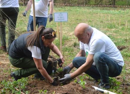 Піар з користю: Біля Ужгорода висадили 900 дерев