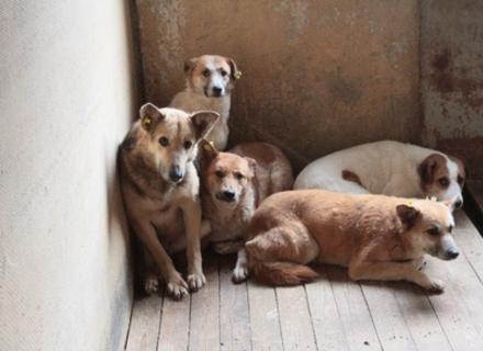 Влада Ужгорода повинна виділити кошти на стерилізацію безпритульних тварин