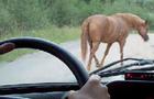 На Перечинщині п'яний водій на ВАЗ збив коня