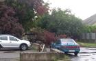 Нічний буревій повалив дерева в Ужгороді. Довелося залучати рятувальників