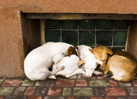 6 ефективних способів допомогти безпритульним тваринам