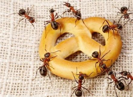 Як боротися з мурахами - 2 надійних способи