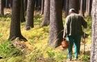 90-річного дідуся, який на Хустщині пішов у ліс і не повернувся припинили шукати