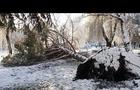 Наслідки стихії на Закарпатті: повалені дерева, знеструмлені села