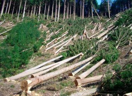 Лісова мафія на Закарпатті: Чергове розслідування центрального телеканалу (ВІДЕО)