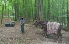 На Закарпатті прикордонники затримали контрабандистів, які перевозили сигарети в Румунію на конях