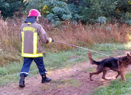 Ужгородські рятувальники витягли з ями собаку