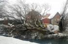 В Хусті велике дерево впало на міст та зруйнувало його
