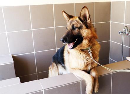 Як доглядати за собаками в умовах поширення коронавірусу