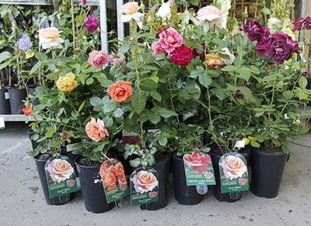 Садо-городні пестициди
