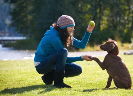 Як виховати собаку: правила, які допоможуть вам стати ватажком
