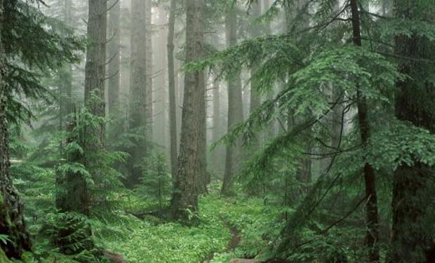 На Хустщині житель Одеської області пішов по гриби і зник