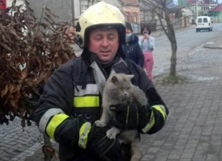 Хустські рятувальники знімали з даху кота, який не зміг злізти самотужки