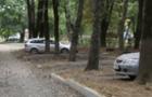 В одному з дворів Ужгорода вирішили зрубати здорові клени (ВІДЕО)