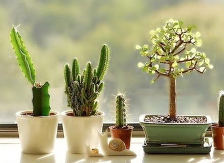 15 отруйних рослин, які швидше за все є у вас вдома
