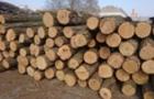 Лісівники області оприлюднили ціни на дрова у зимовий період