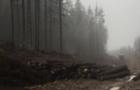 Посадовці держлісгоспу на Тячівщині вкрали дерев на 1,2 млн. грн