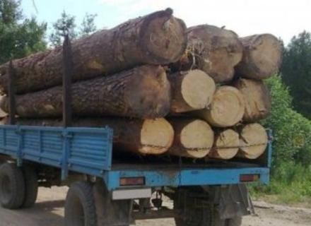 Відео туриста про лісовози спонукало закарпатську прокуратуру почати розслідування (ВІДЕО)