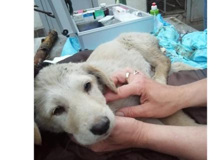 В Ужгороді малолітні цигани відрубали цуцику хвіст і кинули помирати
