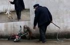 Інтрига: інтернет-сторінка з петицією про заборону цирків із використанням тварин в Ужгороді знову працює. Залишився тиждень