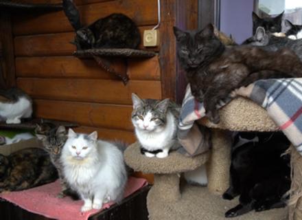 Б'ютифул Карпати про котів Подобовця