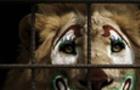 Ужгородська міськрада на найближчій сесії розгляне питання заборони пересувних цирків та зоопарків