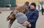 Активісти-екологи намагаються врятувати степового орла, якого експлуатують в центрі Ужгорода