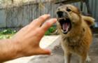 В Ужгороді скажений собака покусав господаря
