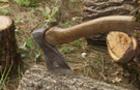 На околицях Ужгорода чоловік незаконно вирубував дуби