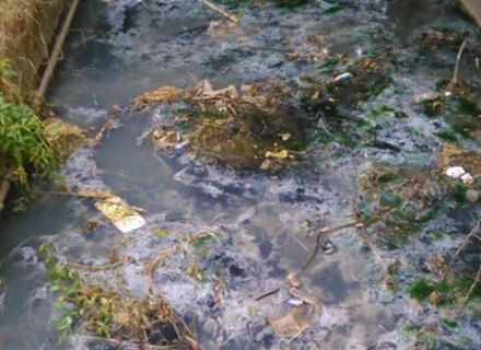 Активісти Перечина показали, у якому місці зливаються хімікати в річку Уж (ВІДЕО)