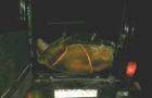 Поліція затримала берегівського депутата-браконьєра та його спільника, які вбили оленя