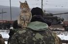 Закарпатська бригада повернулася з фронту (ВІДЕО)