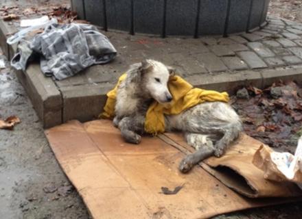 У Мукачеві збиту автомобілем собаку ще живою викинули на смітник (ФОТО)