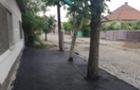 У Берегові заасфальтували дерева на тротуарі